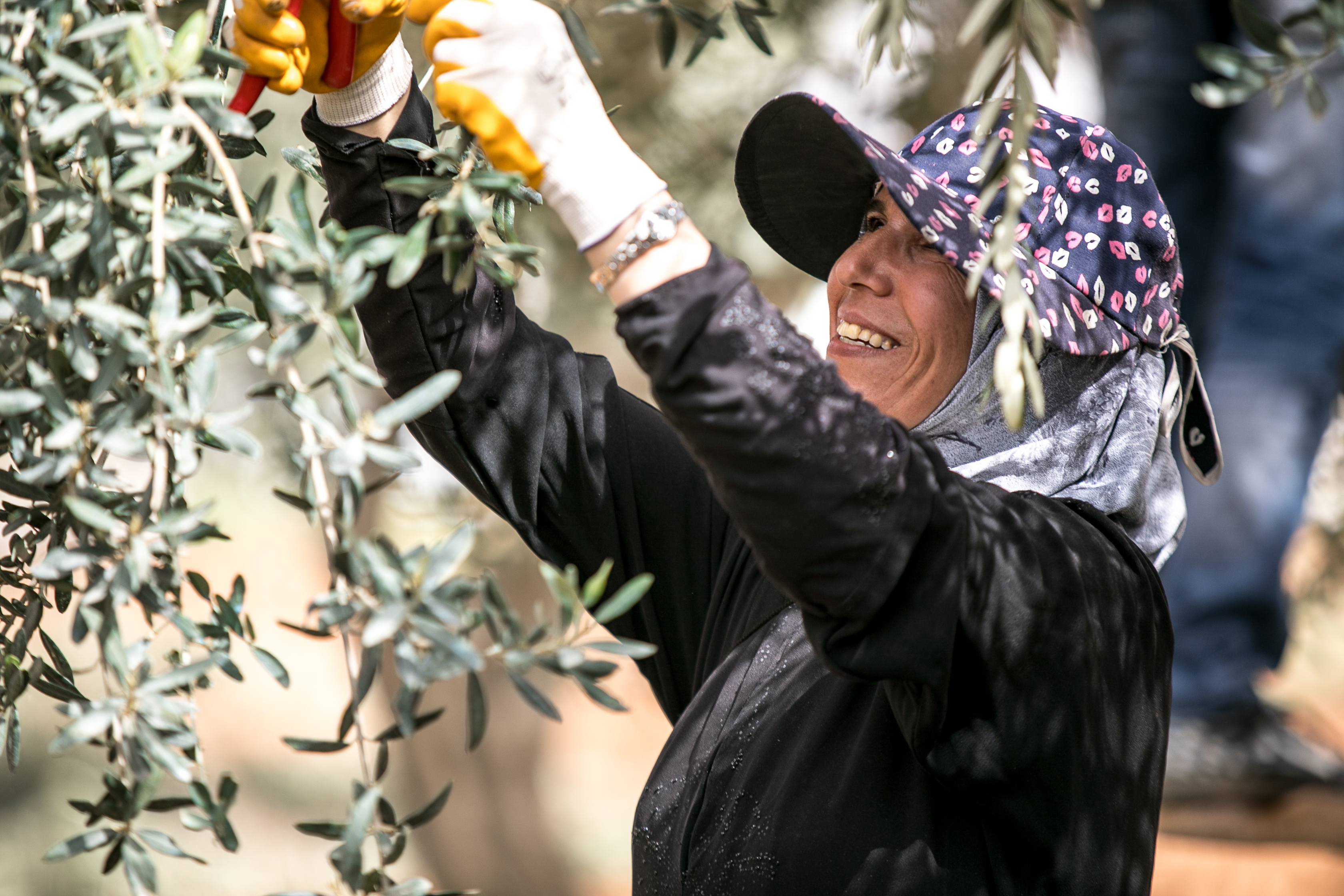 A woman pruning an olive tree