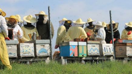 A group of people working with bee hives
